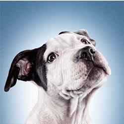 dog-thumbnail