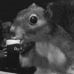 guiness_squirrel-thumbnail