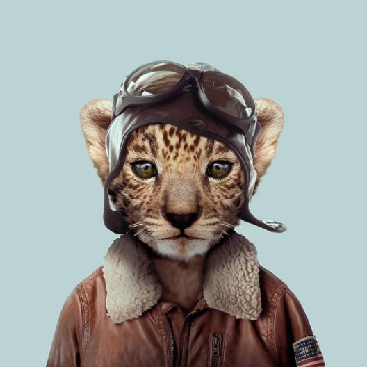 zoo-portraits-1