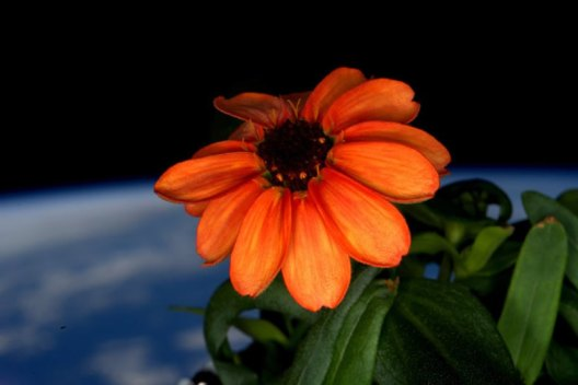 space-flowers-2