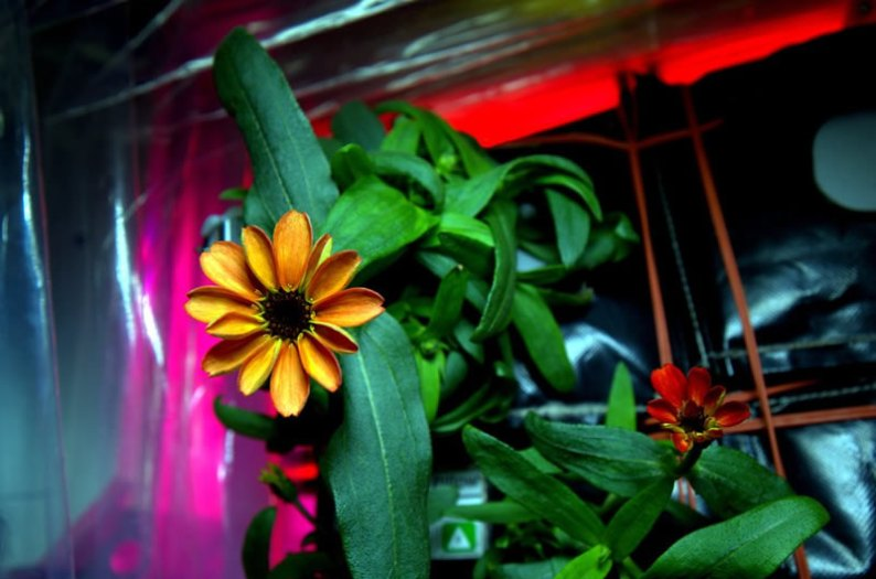 space-flowers-3