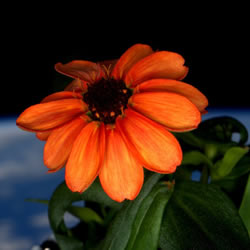 space-flowers-thumbnail