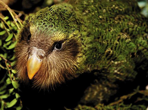 2009-chick